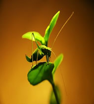 C mo espantar a los insectos de nuestras plantas saber - Plantas para ahuyentar insectos ...