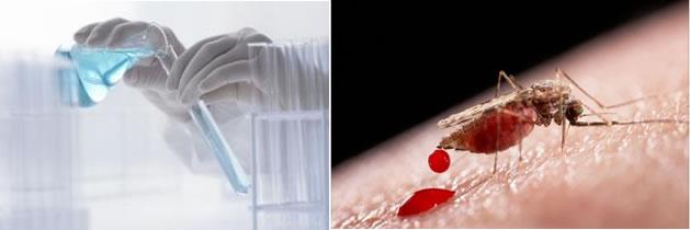 Avanzan en cosméticos que harían invisible a la gente de los mosquitos
