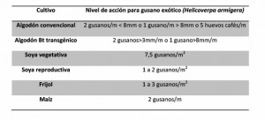 fumigacion helicoverpa armigera. Control de plaga helicoverpa armigera