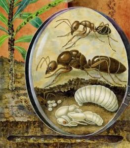 ciclo de vida de la hormiga argentina en iagenes