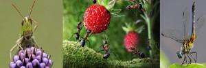 insectos curiosos