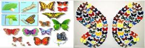 mariposas en argentina