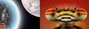 cucarachas en el espacio