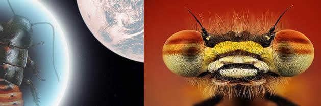 Nacen cucarachas en el espacio extraterrestre