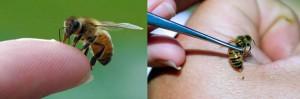 El poder curativo de las abejas. Curacion con abejas. Apiterapia