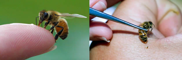 El poder curativo de las abejas