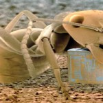 Algunas curiosidades de las hormigas