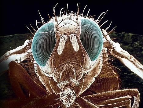 Es posible un futuro ataque con insectos