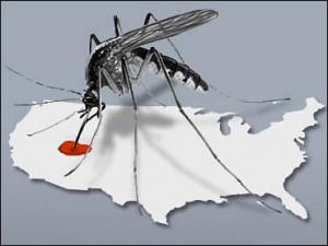 infestacion virus occidental