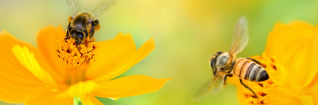 Descubren rasgos maternales en las abejas