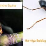 Los insectos más increíbles