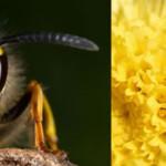 5 cosas importantes que tal vez no conozca de las avispas