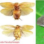 Descubren 3 nuevas especies de cucarachas gigantes