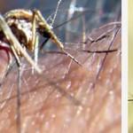 Control de Aedes Aegipty y Dengue