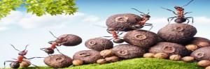 Las Hormigas son muy Organizadas en busqueda de Alimentos
