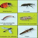 Insectos perjudiciales y beneficiosos