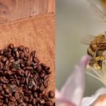 Las abejas no pueden resistir el néctar con cafeína