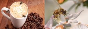 Las abejas no pueden resistir el néctar con cafeína. Las abejas eran más persistentes