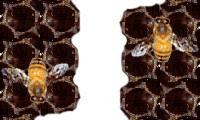 abejas-control-fumigacion