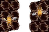 empresa-fumigacion-abejas