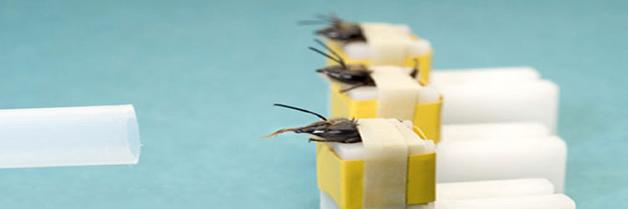 Cientificos utilizarán insectos contra toxinas y explosivos