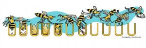 abejas-enfermeras-control