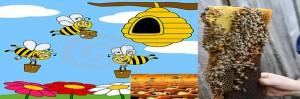 abejas-miel. cultivo abejas