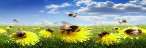 Una amenaza planteada por las abejas, se ha descubierto los secretos de las abejas como ladronas de polen