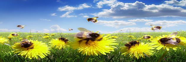 Una amenaza planteada por las abejas