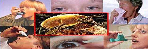 Los ácaros del polvo doméstico