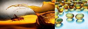 Los insectos son una fuente importante de ácidos grasos omega-3, el aceite de insecto es una posible nueva fuente de los ácidos grasos