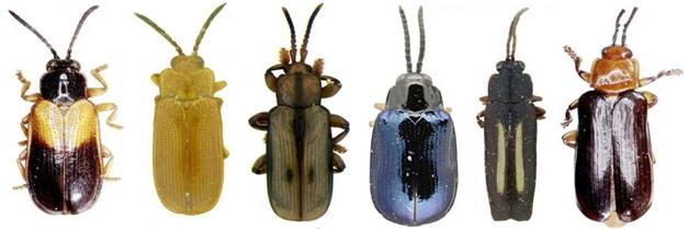 Científicos pueden desentrañar rápidamente la relación entre las plantas y los insectos