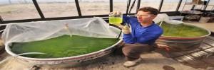 Las Algas, en los tanques de agua potable