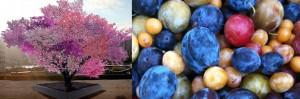 Crean árbol que da 40 frutas distintas, la escultura a través del injerto