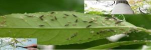 Arboles con plagas y enfermedades