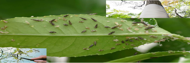 Aumento de plagas y enfermedades en árboles