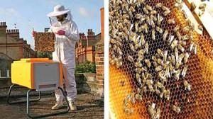 Ayudemos a las abejas. Está reduciendo mundialmente el numero de abejas