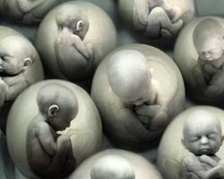 bebes-clonados