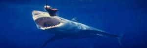 Carnada para tiburones, enganchan a perros y gatos vivos a un anzuelo