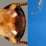 Los cebos para cucarachas se van tornando adversos