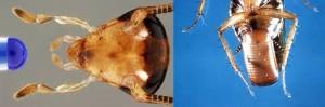 fumigacion-cebos-cucaracha
