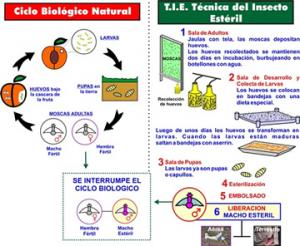 ciclo-biologico