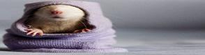 Control de roedores, Fumigacion roedores