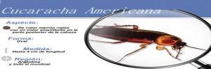 control cucaracha americana