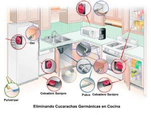 Cucarachas alemanas en la cocina, del hogar