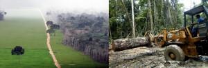 La evidencia de la pérdida de especies en el Amazonas causada por la deforestación.