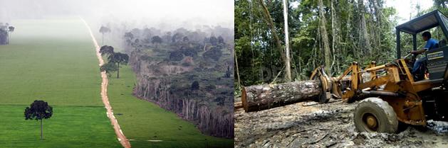 La evidencia de la pérdida de especies en el Amazonas