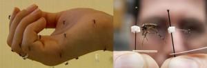 Trazado de la eliminación del dengue. Wolbachia la bacteria contra el dengue