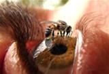 eliminar-fumigacion-abejas