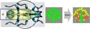 El escarabajo de cuernos largos inspira en la lucha contra la falsificación en los billetes